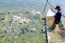 forestry aquatic exports expected to earn usd 205 billion in 2019