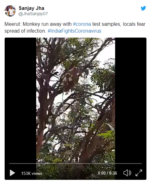 india monkeys steal covid 19 test samples from health worker